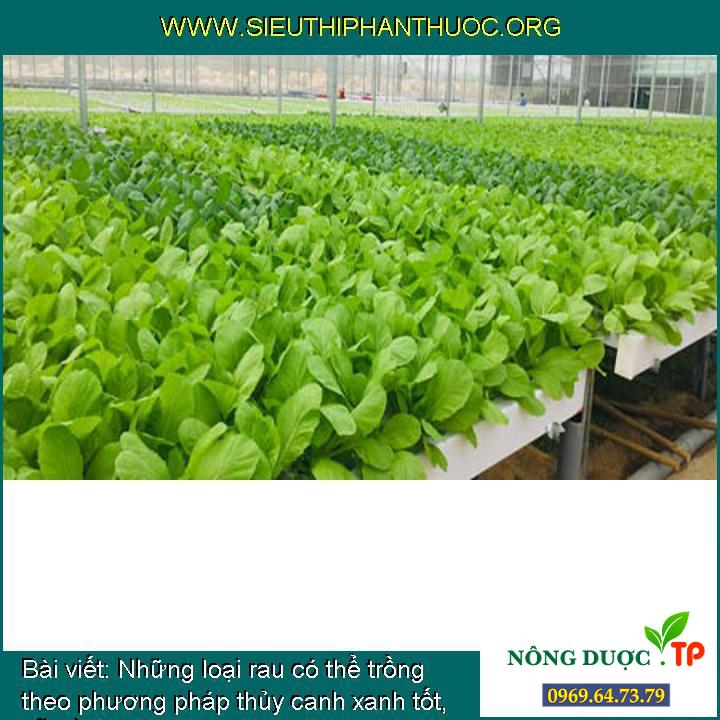 Những loại rau có thể trồng theo phương pháp thủy canh xanh tốt, dễ trồng