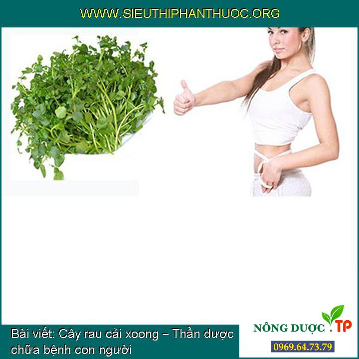 Cây rau cải xoong – Thần dược chữa bệnh con người