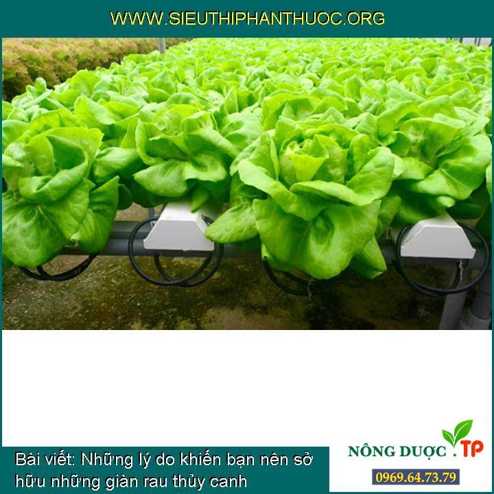 Những lý do khiến bạn nên sở hữu những giàn rau thủy canh