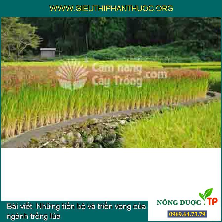 Những tiến bộ và triển vọng của ngành trồng lúa