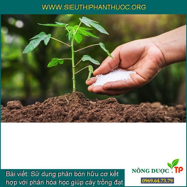 Sử dụng phân bón hữu cơ kết hợp với phân hóa học giúp cây trồng đạt năng suất vượt trội