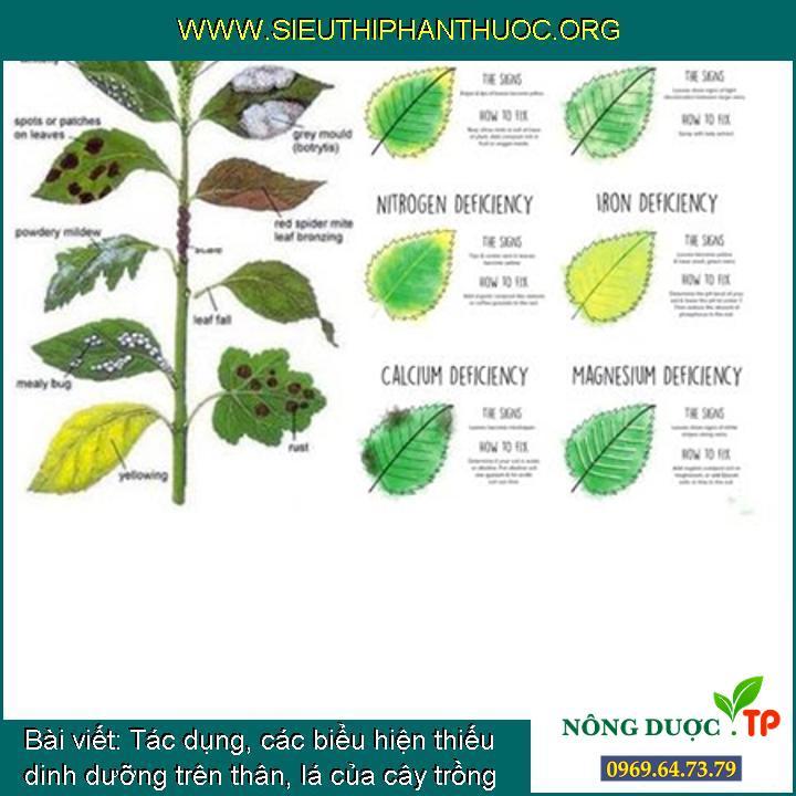 Tác dụng, các biểu hiện thiếu dinh dưỡng trên thân, lá của cây trồng