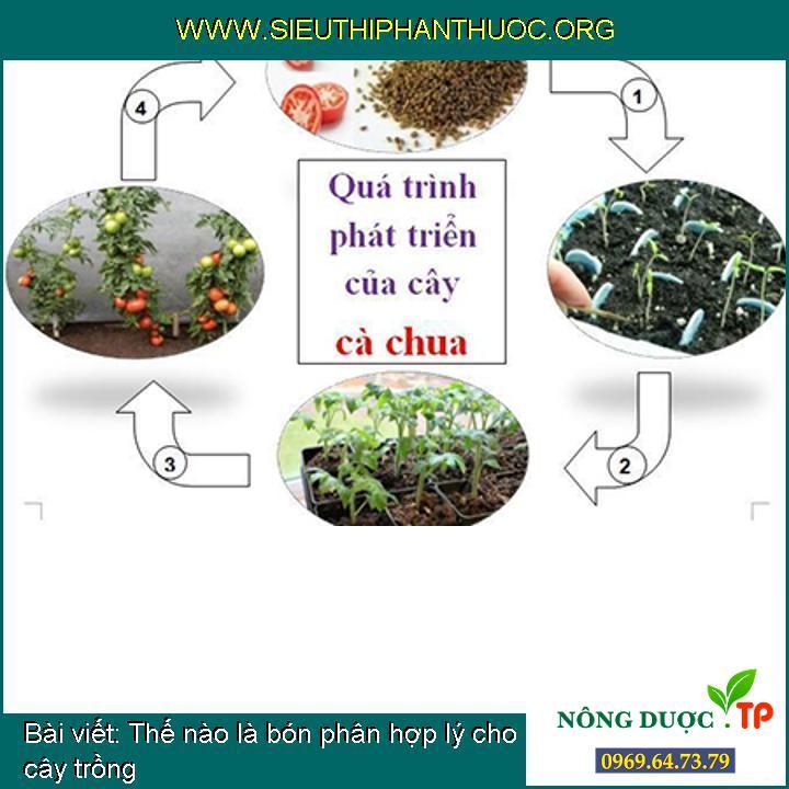 Thế nào là bón phân hợp lý cho cây trồng