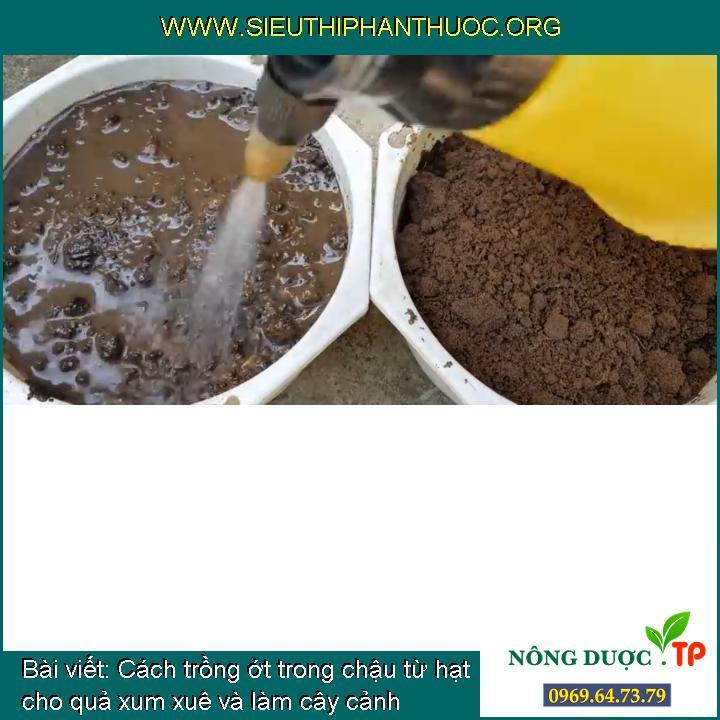 Cách trồng ớt trong chậu từ hạt cho quả xum xuê và làm cây cảnh