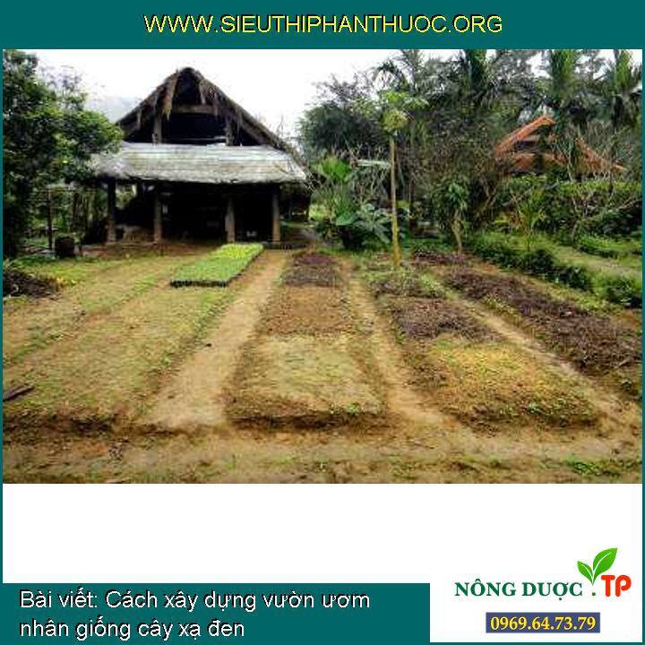 Cách xây dựng vườn ươm nhân giống cây xạ đen