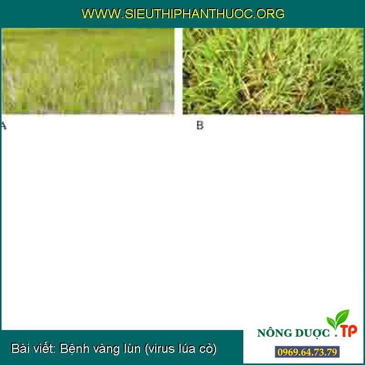 Bệnh vàng lùn (virus lúa cỏ)