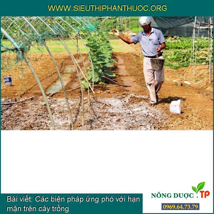 Các biện pháp ứng phó với hạn mặn trên cây trồng