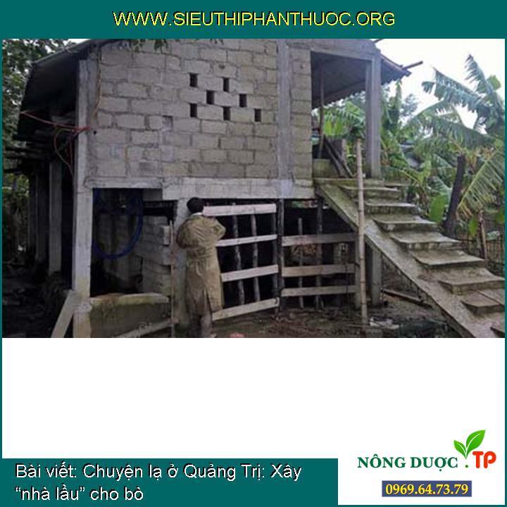 """Chuyện lạ ở Quảng Trị: Xây """"nhà lầu"""" cho bò"""